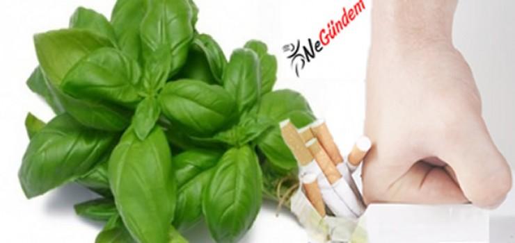 Sigarayı Bırakmada Fesleğen Yaprağının Kullanımı