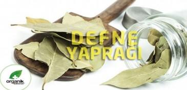 Defne Yaprağı Faydaları ve Defne Yaprağı Çayı